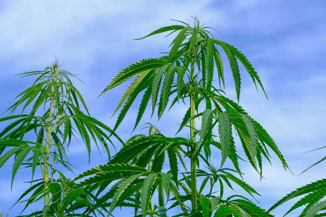 medical-cannabis-card